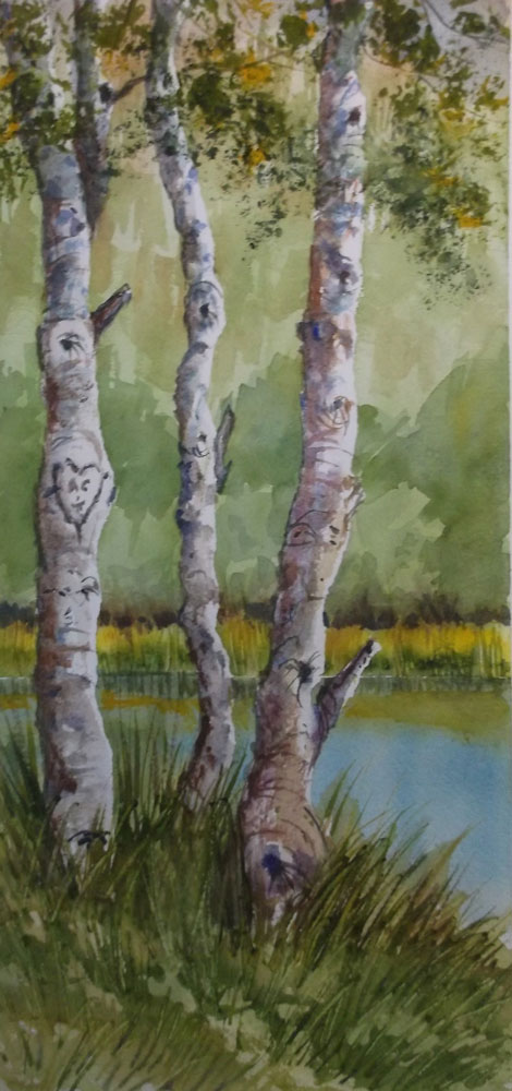 Trees by Susan Barry Aspens