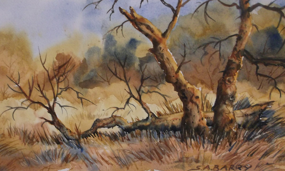 Trees by Susan Barry- Old Forest