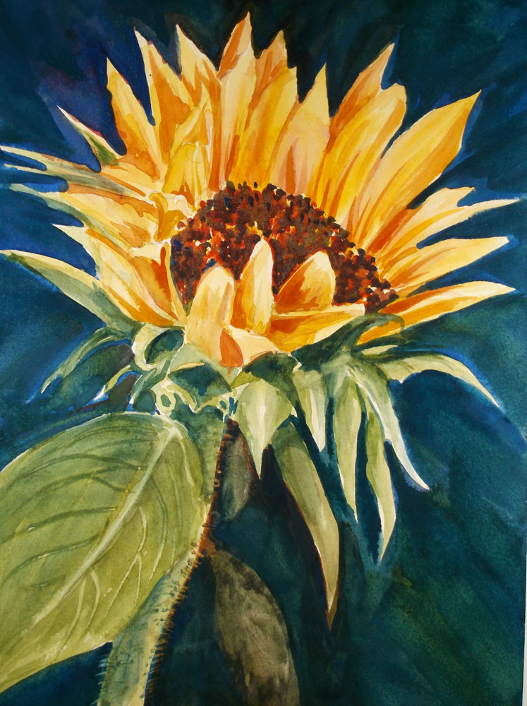 Watercolor by Susan Barry - Sunflower